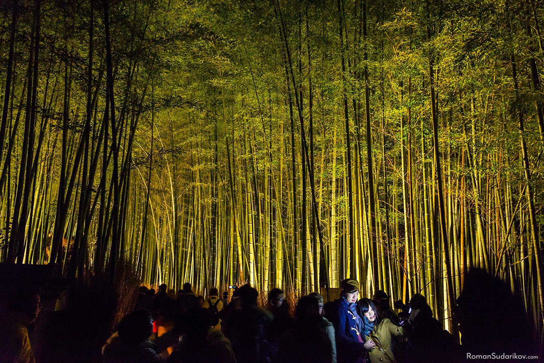 Бамбуковый лес в Арашияма, Киото, Япония