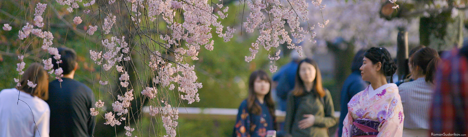 A woman in a beautiful kimono is viewing cherry blossom flowers at Philosopher's Path in Kyoto.