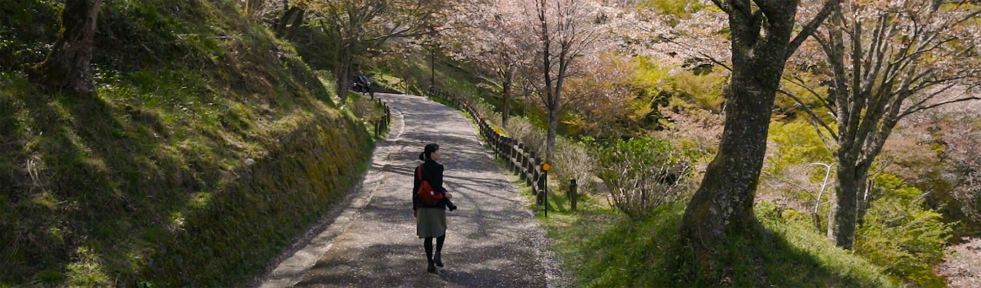 Beautiful spring weather in Yoshino, Nara prefecture